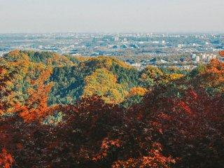 Salah satu yang dicari banyak orang. Momiji, pohon ginko, dan pohon pinus membuat konfigurasi warna yang indah di perbukitan. Pemandangan ini terlihat dari salah satu gardu pandang di Takaosan. Di belakang terlihat pemandangan perkotaan Tokyo.