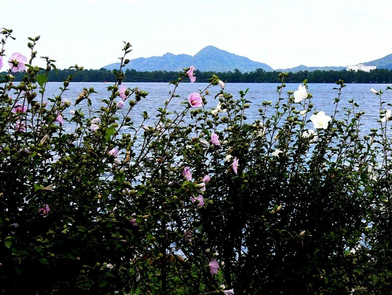 <p>Looking through flowers across the bay</p>