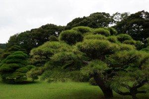 มีต้นไม้หลากหลาย
