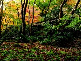秋深まる奥嵯峨、竹林の里の庵
