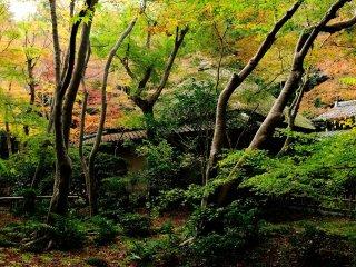 茅葺屋根と苔むす庭 何とも形容し難い光景は別世界だ