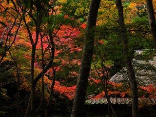 嵯峨の奥に位置するこの草庵 静寂な空気はひんやり そして凛とした雰囲気を感じる