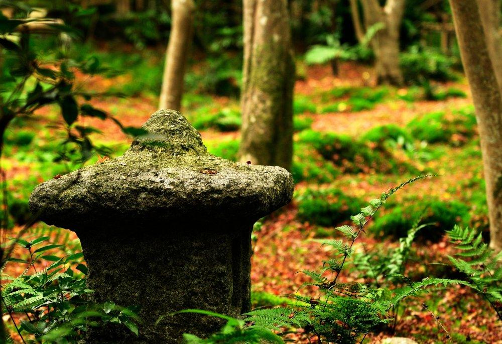 この世界は全てが静寂に包まれている 時折吹く風の音と触れ合う竹の音以外は!