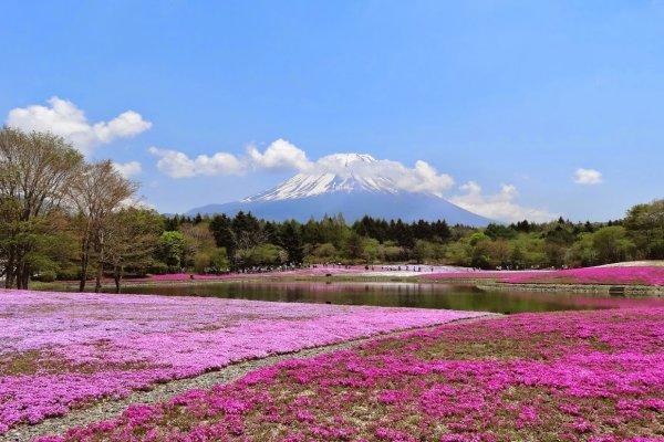 ดอกไม้ของญี่ปุ่นในเดือนพฤษภาคมดอกสุดท้ายที่ฉันจะกล่าวถึง เป็นดอกไม้เล็กๆ ที่อยู่ท่ามกลางวิวทิวทัศน์ที่สวยสุดใจ