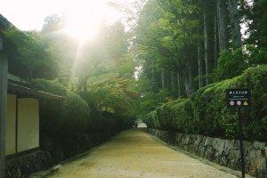 Jalan masuk menuju Garan yang dikelilingi oleh pepohonan hijau