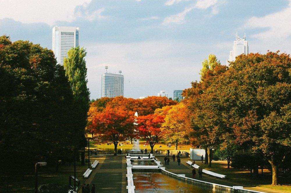 Selamat datang di Taman Yoyogi, terlihat dedaunan berwarna-warni musim gugur, kolam dan air mancur di tengah taman, dan pengunjung yang sedang beraktivitas.