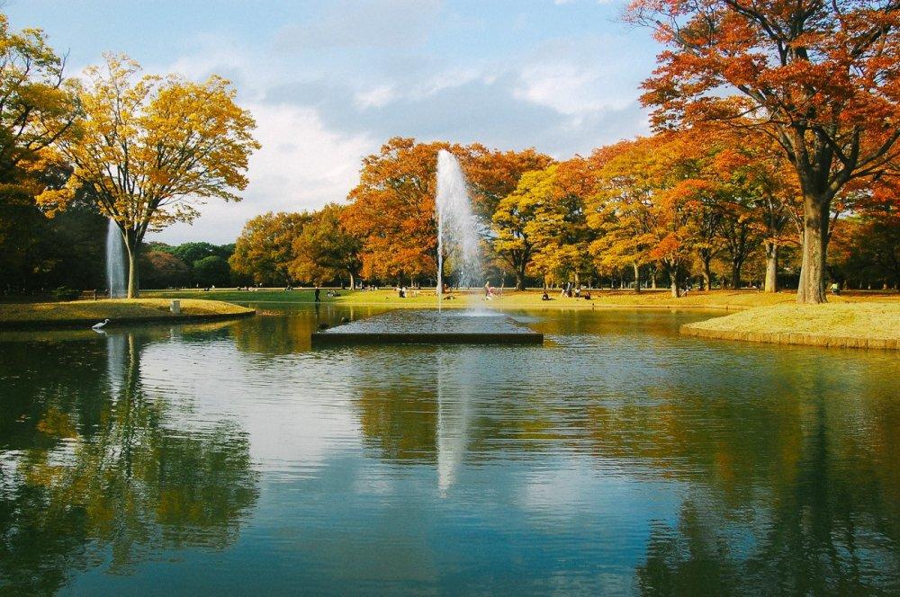Musim Gugur Di Taman Yoyogi طوكيو Japan Travel