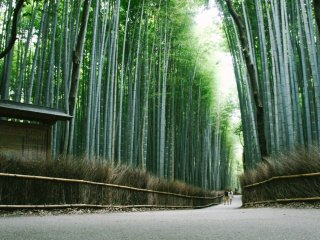 La superbe forêt de bambous d'Arashiyama