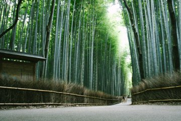 Arashiyama et la Forêt de Bambous