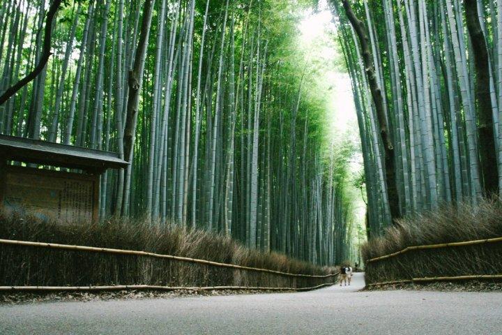 Arashiyama and Bamboo Forest