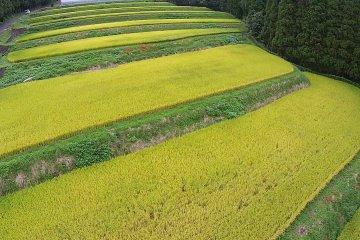 Полет над рисовыми полями