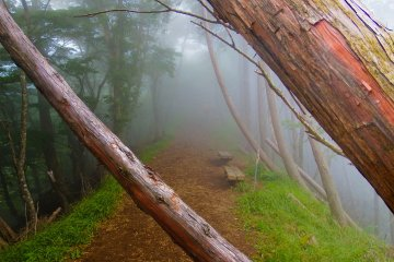 <p>As we ascended further, the thick fog remained</p>