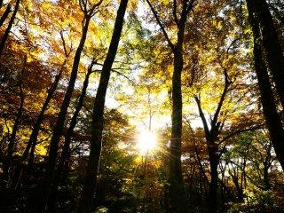 木漏れ日射す林はとても神々しい