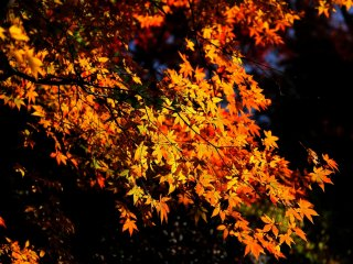 ほんの少しの秋を謳歌しているように見える