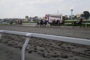 The racing