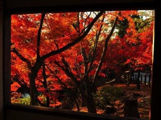 放生池の休憩所から見る紅葉