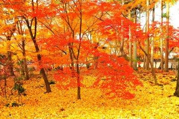 Autumn Foliage of Eikando, Kyoto: 3