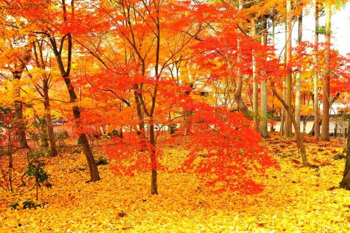 Daun Musim Gugur di Eikando, Kyoto: 3