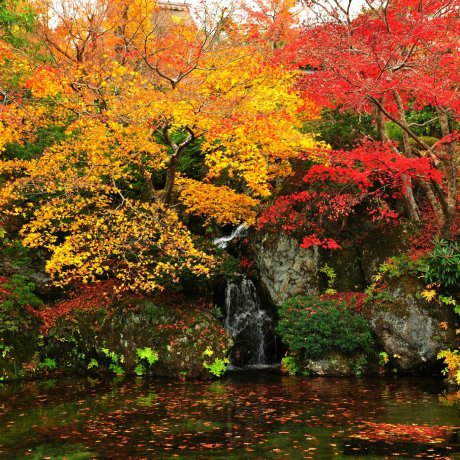 Autumn at Hakone Museum of Art - 2