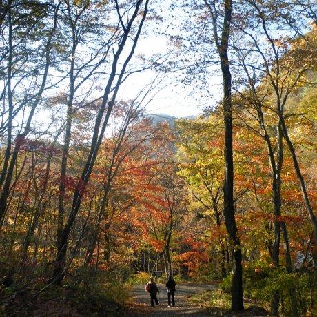 Musim Gugur Menakjubkan menanti di Akiu