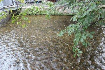 시라카와의 물은 매우 맑다