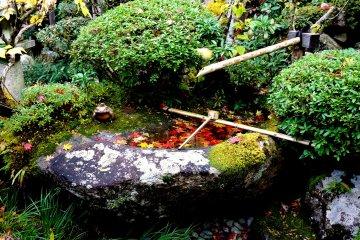 สระน้ำและสวนที่คอนโกะรินจิ
