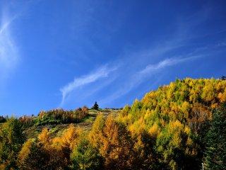 三本滝レストハウスからの眺め!紅葉はここまで降りて来ている