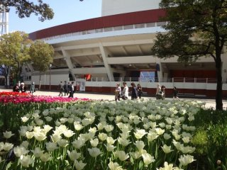 Colorful tulips grace the park and stadium grounds in May.