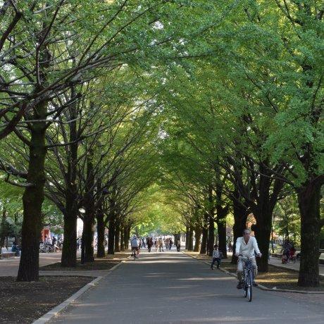 Peaceful Hikarigaoka Park