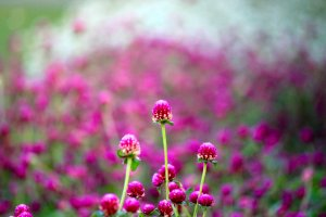 Banyak bunga bermekaran dengan warna cerah yang berhasil saya abadikan