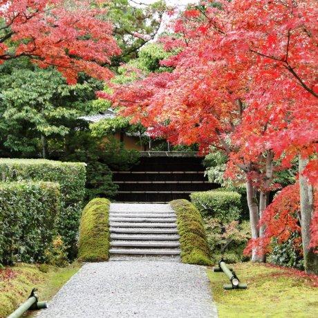 ใบไม้เปลี่ยนสีที่ Katsura Rikyu