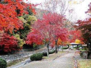 Pinggiran aliran sungainya memiliki 'pertempuran' warna khas musim gugur