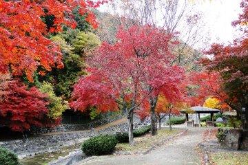 <p>강가의 가을 풍경</p>
