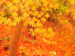 面積約2.5haに北アメリカ原産の樹木約40数種類を植栽 ここの紅葉が一番のお気に入り