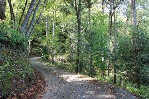 ゆのくにの森、という名前だけあって、静かな林に囲まれた自然豊かなところだ