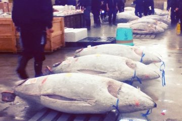 Mercado de Peixe de Tsukiji