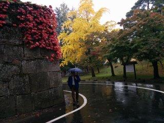 Листва деревьев напоминает сигнал светофора