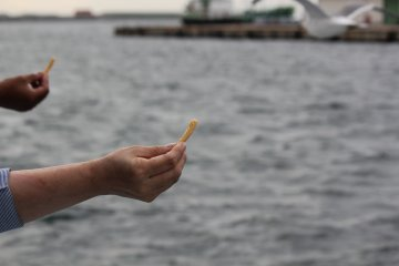<p>Purchase a small bag of shrimp chips for 100yen to feed the flock of seagulls during the boat tour</p>