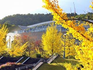 Желтые деревья гинкго окружают спортивный комплекс