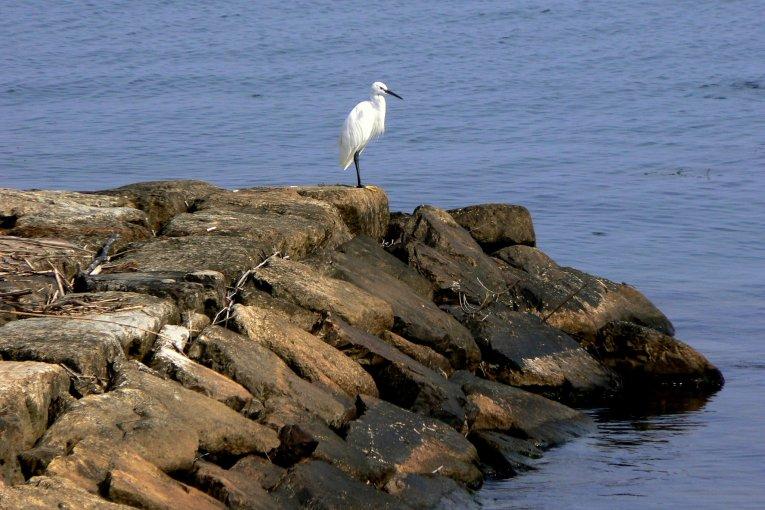 Thế giới chim chóc ở hồ Biwa