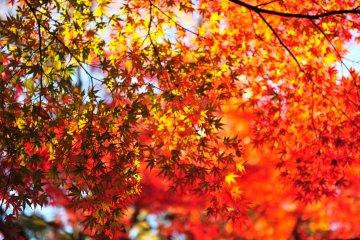 <p>Если взглянуть наверх, то листья будут похожи на множество маленьких рук.</p>