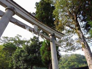 오노 성곽도시 야시로 신사 입구의 돌 토리이, 키 큰 나무들