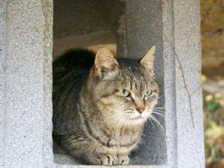 Пока вы будете подниматься на вершину горы Майдзуру, вам обязательно повстречаются котики - здесь их очень много. Я просто не могла пройти мимо этой кошки и не сфотографировать её. Мне кажется, ей это даже понравилось