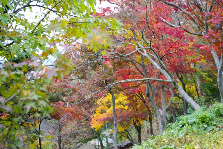 Leo núi Maizuru