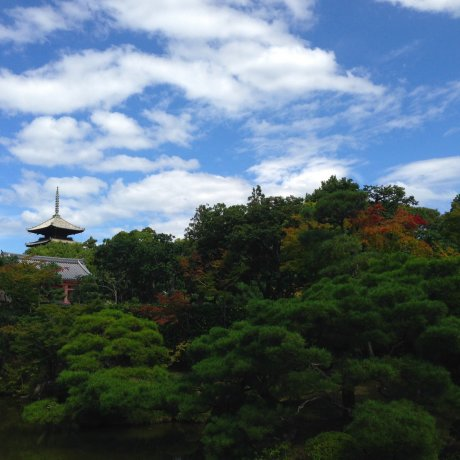 Ninna-ji's Ancient Beauty