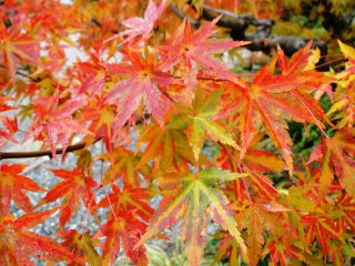 The folk park is one of Gero Onsen's best places to view the autumn leaves