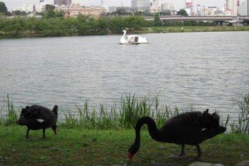 Озеро Сэмба
