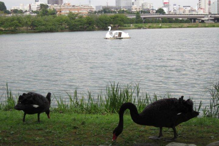 Lake Senba, Mito