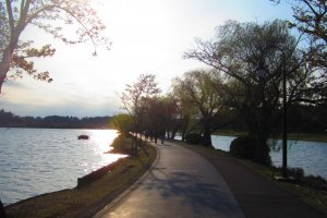 The bike/jogging path at Lake Senba, surrounded by willows