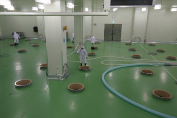 <p>Spotless sake production facility turning out a highly regarded tipple</p>